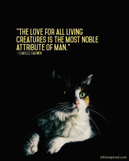 12 WhatsApp DP - THE LOVE FOR ALL LIVING CREATURES IS THE MOST NOBLE ATTRIBUTE OF MAN