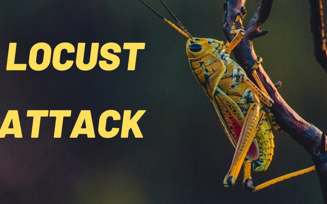 Locust Attacks and the subsequent Impact