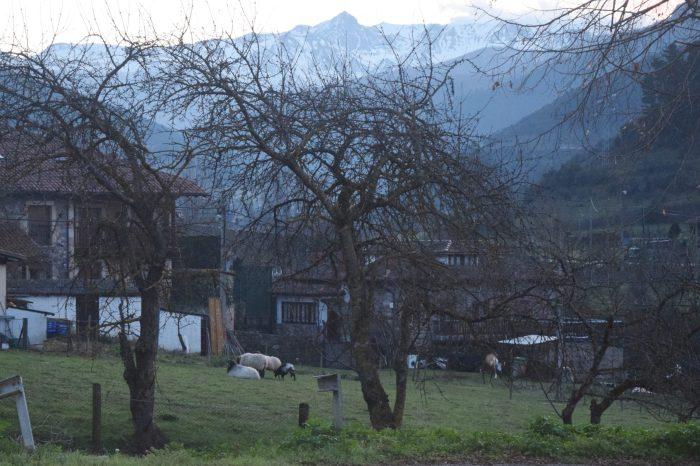 Convocadas las ayudas para fomentar las razas autóctonas españolas de ganado en Cantabria