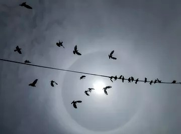 Why Don't Birds Get Electrocuted on Electric Wires?