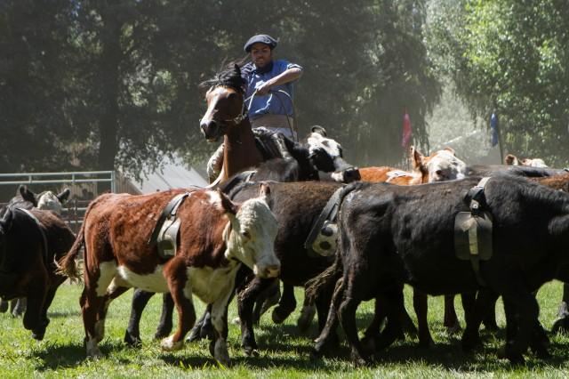 Enero: agenda de actividades turísticas en Neuquén