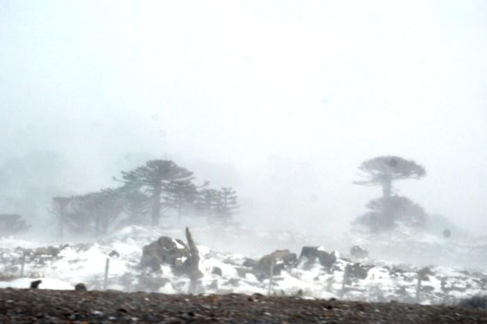 Paso Internacional Pino Hachado, hoy permanecerá cerrado por nieve