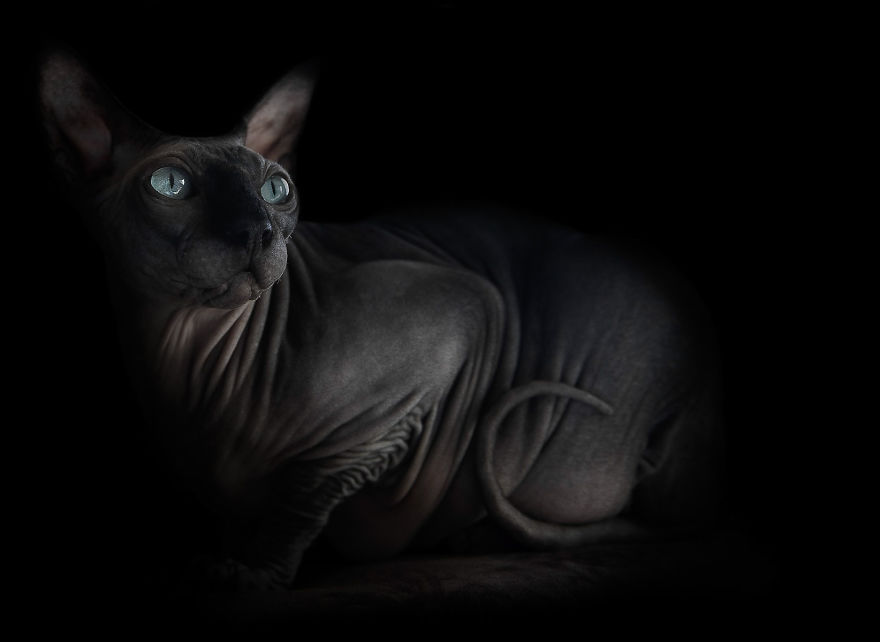 sphynx-cat-photos-by-alicia-rius-7__880