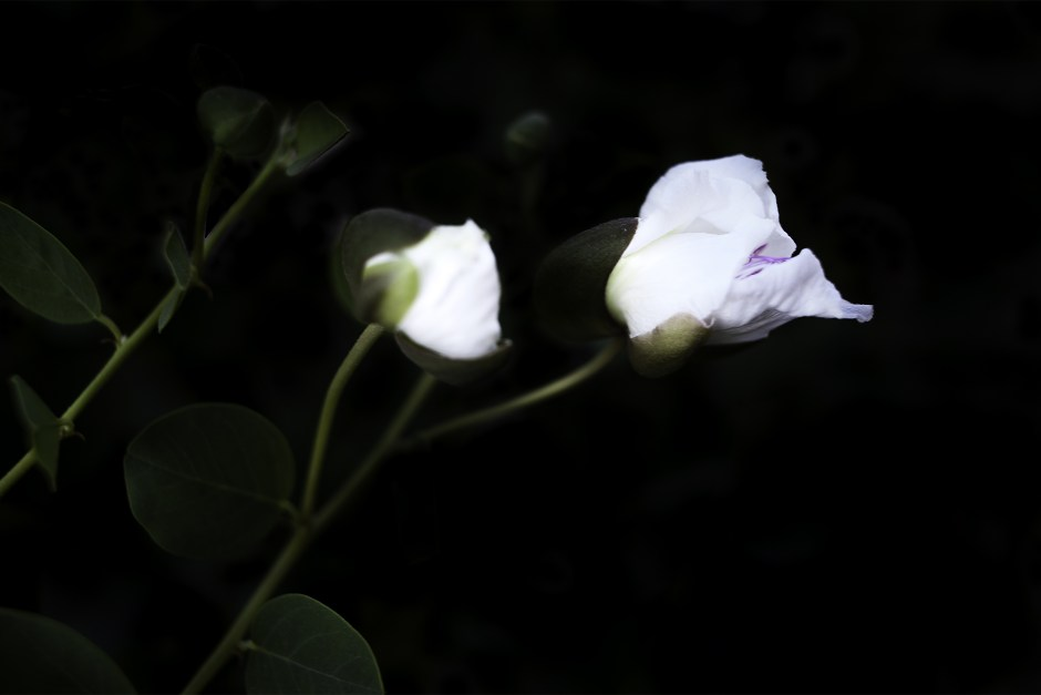 200715_0102