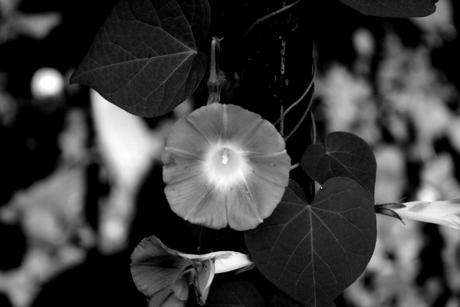 black-aand-white