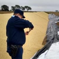 Barrancas: rompieron un silo bolsa y robaron 750 kilos de soja