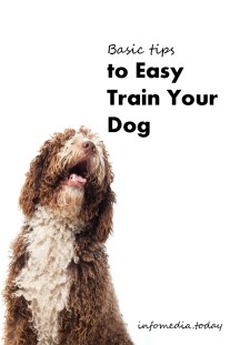 Basic Tips to Easy Train Your Dog