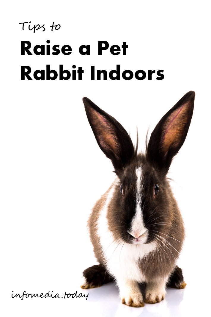 Tips to Raise a Pet Rabbit Indoors