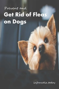Prevent and Get Rid of Fleas on Dogs