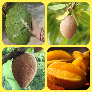 Frutas  Importante Para  la Salud