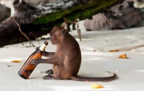 Mono alcohólico es condenado a cadena perpetua