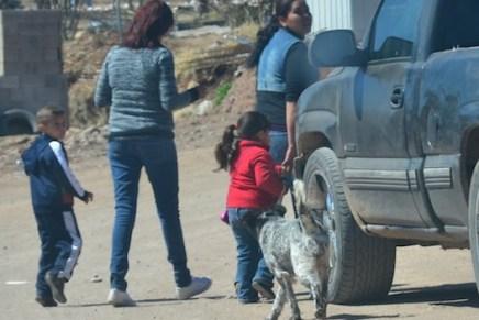 Se extiende vacunación canina hasta el 7 de abril