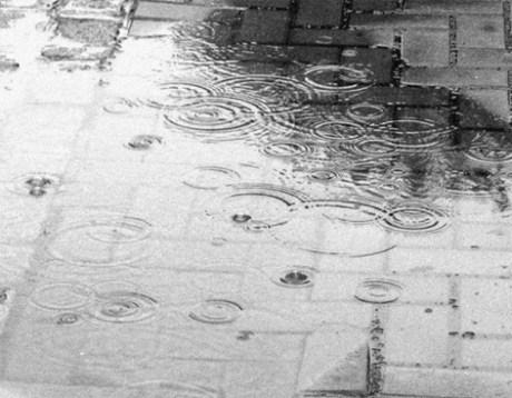 Las lluvias han favorecido al Estado.