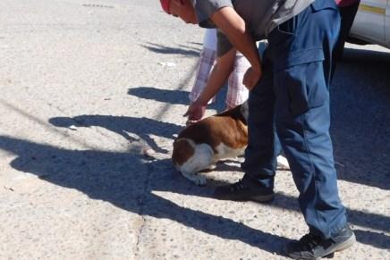 Implementan campaña de vacunación de mascotas