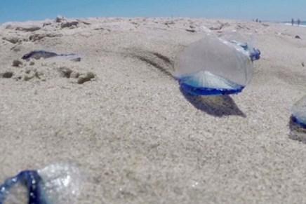 Pesca de agua mala inicia en costas de Sonora