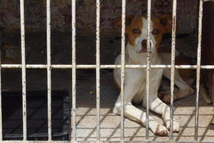 Aumentan reportes de mordeduras de perros en la vía pública: OCAN