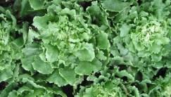 gezond vermageren recept andijviehussel eenpansgerecht - recept met verse andijvie.