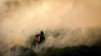 Фото дня: Индонезия в огне