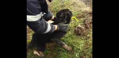 Misiune de salvare a unui câine cazut intr-un canal, a pompierilor oradeni. VIDEO