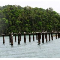 Medio Ambiente arresta ciudadanos por depredar árboles en Los Haitises