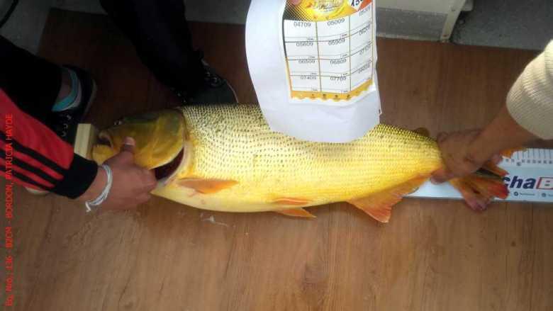 Resultado del 56° Torneo de Pesca del Dorado
