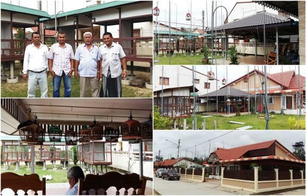 ltpn birdfarm, farm yala thailand, perkutut, zebradove, birdsfarm