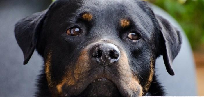 Smutné oči opuštěných psů