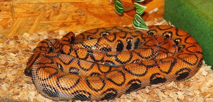 V teráriu nejčastěji chováme hady