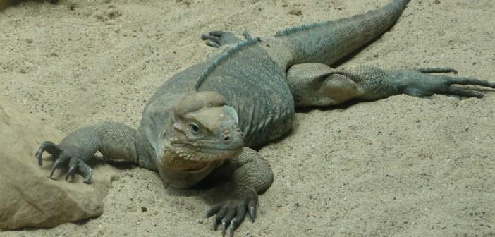 V teráriu může být i písek