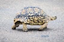 Co jste možná o želvách nevěděli