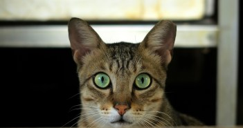koupat nekoupat kočku