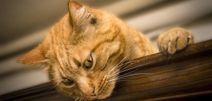 pět zajímavých faktů o kočkách