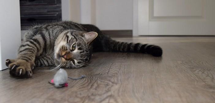 fakty o kočkách