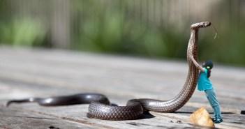 tři druhy hadů