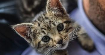 Čtyři divné věci, které dělají kočky, a co znamenají