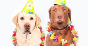 Deset zajímavých faktů o psech, o nichž jste neměli ani zdání