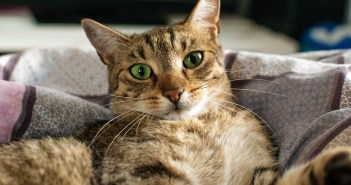 Deset zvláštností, které ke kočkám patří. Všimli jste si všech?