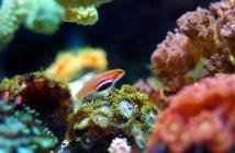 Jak poznáte, že je vaše akvarijní rybička nemocná?