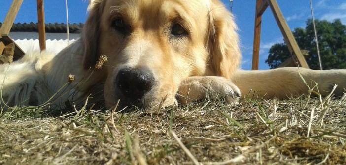 Jak uklidnit psa, když trpí úzkostí?