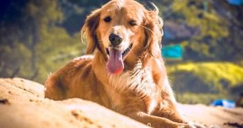 Přemýšlíte, že si pořídíte psa? Prozradíme, jestli je lepší pes či fena