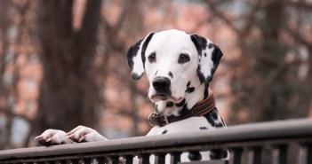 Učíte psa nové povely? Vsaďte na gestikulaci. S některými vám poradíme