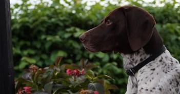 Víte, že psa si můžete pojistit? Aneb fakta o psech, o nichž jste nevěděli
