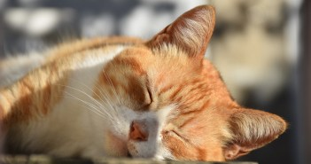 Jak se starat o venkovní kočky? Kastrace je nutností