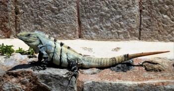 Pro začátečníky: Obecné informace o chovu ještěrů