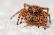 co jste o pavoucích nevěděli