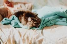 i kočky vás můžou budit