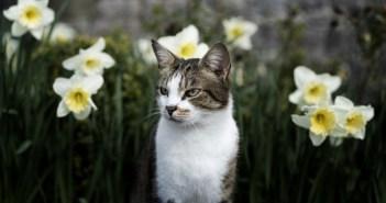 na kočky leze jaro
