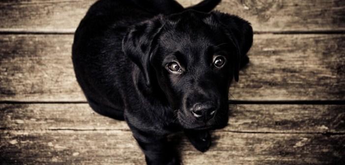 pozor na obezitu u psů