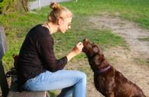 zásady krmení psa