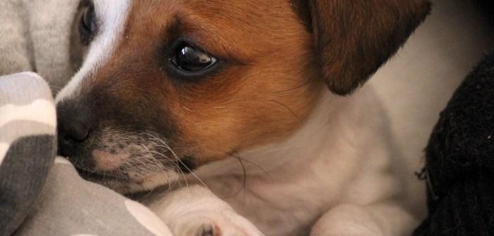 Jak poznáte, že je pes ve stresu